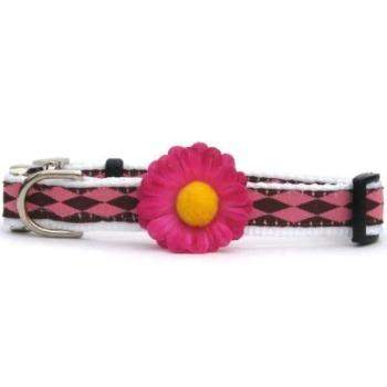 Gerber Daisy Dog Collar - All Metal Buckles(Pink) - Paws & Purrs Barkery & Boutique