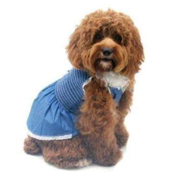 Light Up My Sky Chambray Dog Dress