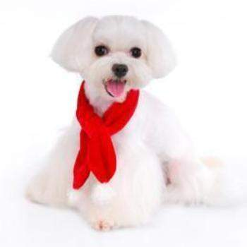 Pooch Outfitters Santa Paws Dog Scarf-Paws & Purrs Barkery & Boutique