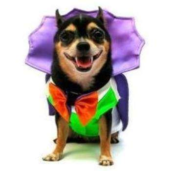 Pampet Puppe Love Dogula Dracula Dog Halloween Costume-Paws & Purrs Barkery & Boutique