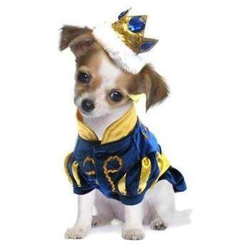 a dog wearing a costume