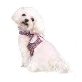 Pooch Outfitters Addison Dog Harness Top - Paws & Purrs Barkery & Boutique
