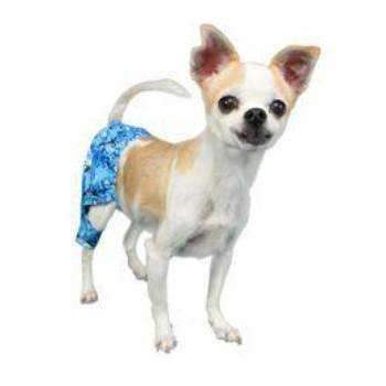 Pooch Outfitters Shark Dog Swim Trunks - Paws & Purrs Barkery & Boutique