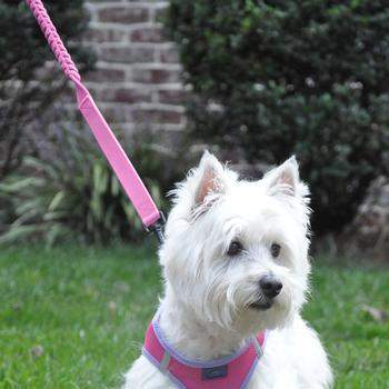 Doggie Design Candy Pink Soft Pull Traffic Dog Leash-Paws & Purrs Barkery & Boutique