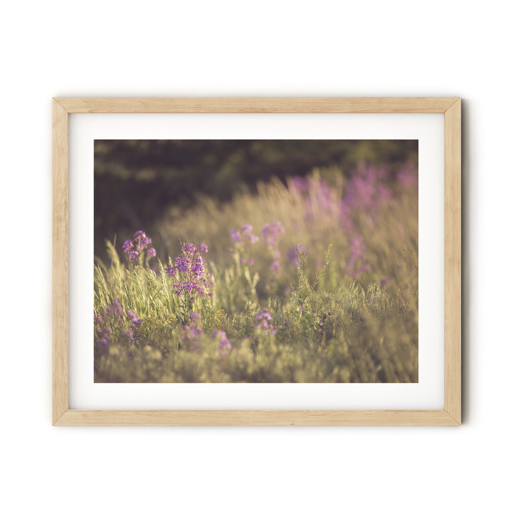 Wildflower Fields, digital print - Harmony House, LLC