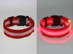 Pet Safety Collar - Glow in the dark