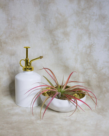 White Spray & Air plant bowl