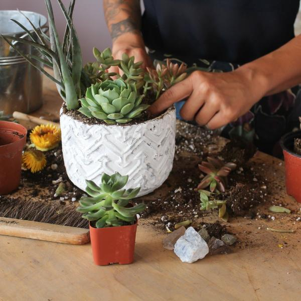PRIVATE SUCCULENT GARDENING