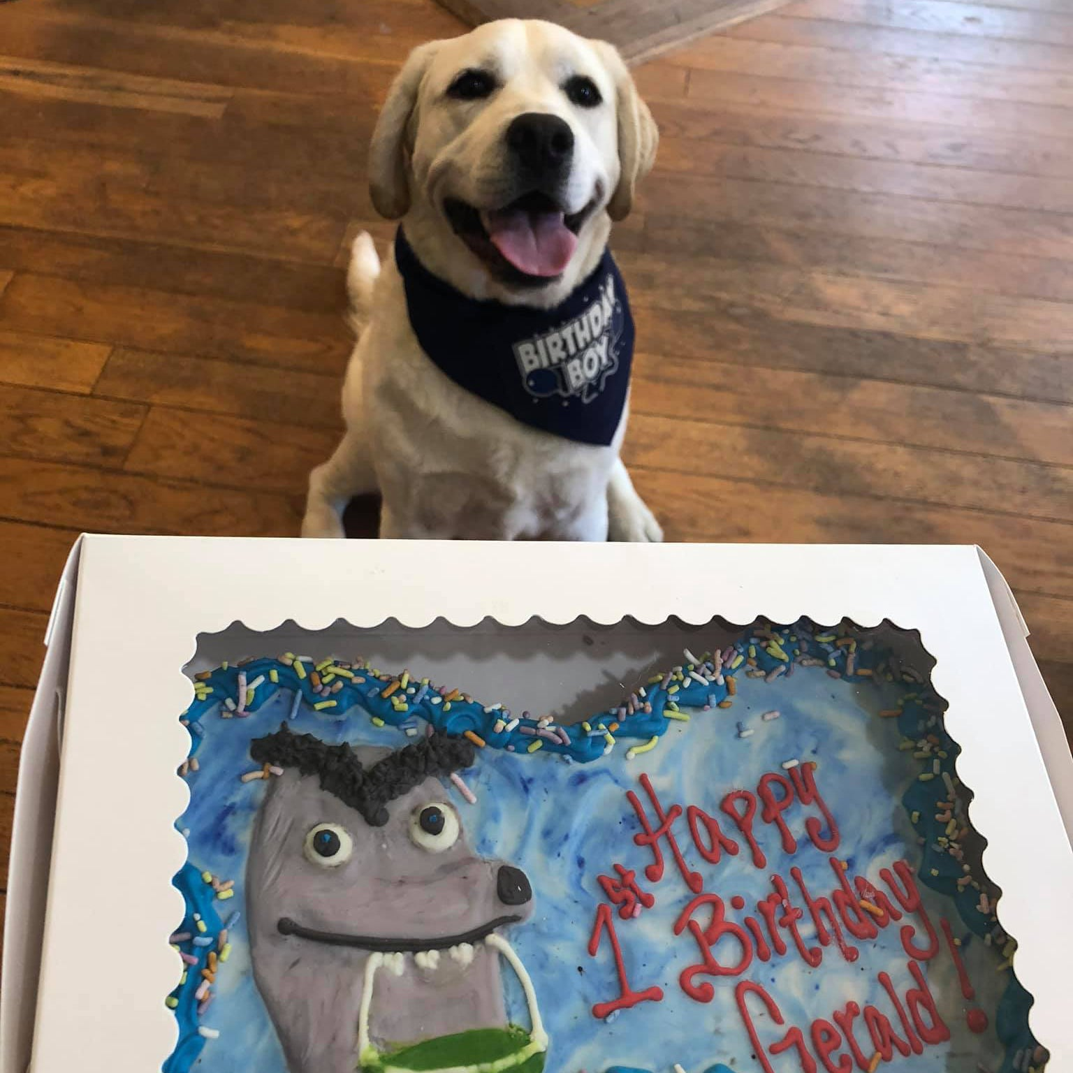 Dog Cakes in Massachusetts
