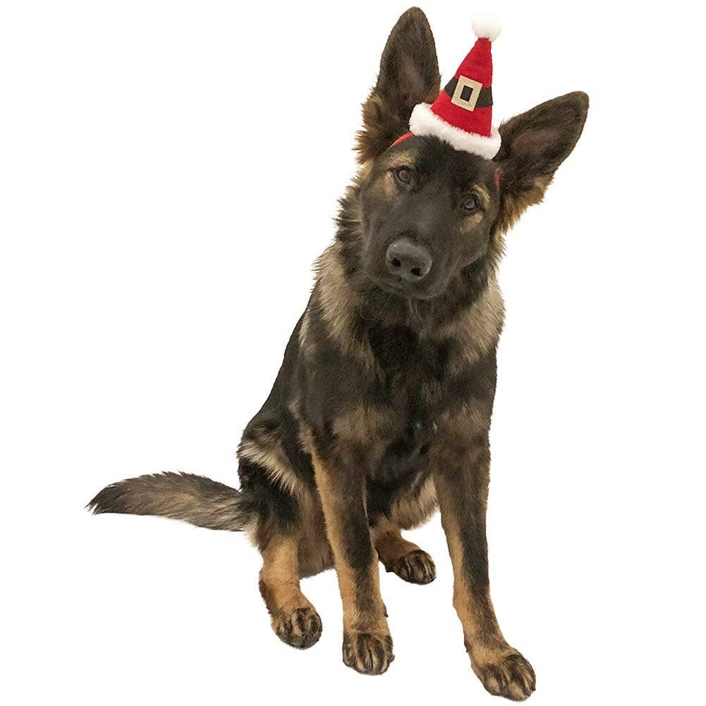 Midlee Dog Santa Hat Headband for Large Dogs