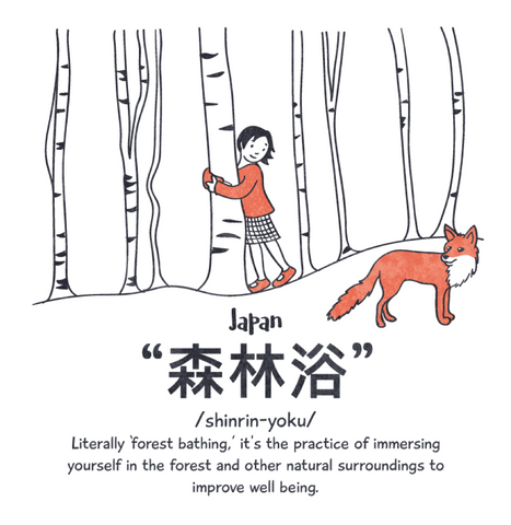 Girl in the woods with a fox