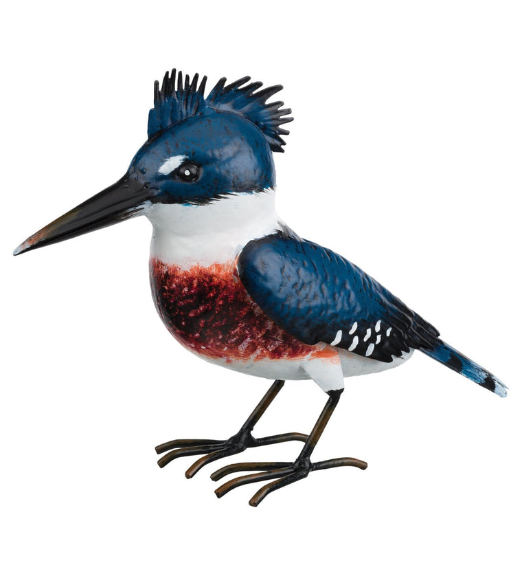 Kingfisher Songbird