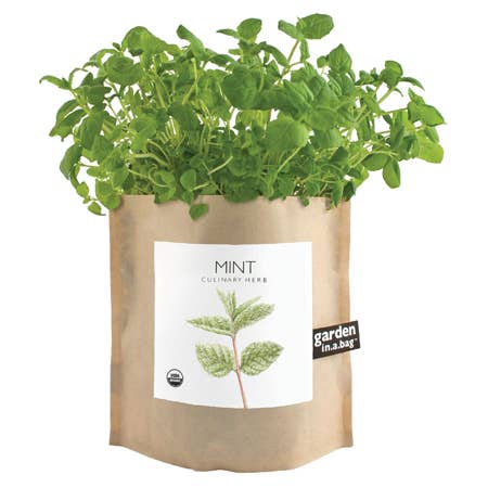 Mint Garden in Bag