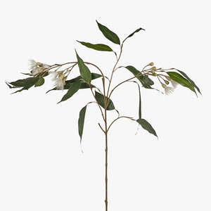 Eucalyptus Flowering Cream 110cm - HartCo. Home & Body