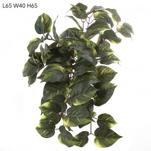 Pothos Hanging Bush - HartCo. Home & Body