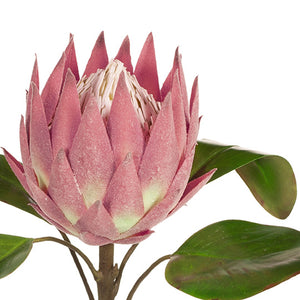 FI - Burgundy Green Protea King - HartCo. Home & Body