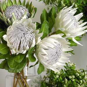 FI - Protea King - Cream - HartCo. Home & Body