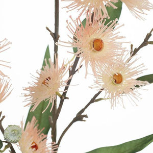 Eucalyptus Flowering Seed - Pink - HartCo. Home & Body