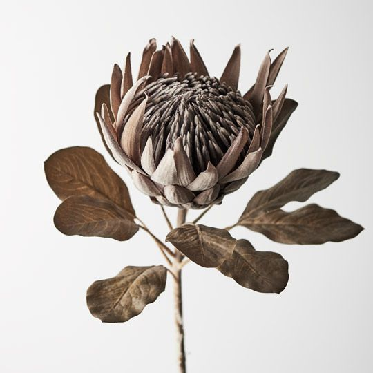 Protea King - Brown