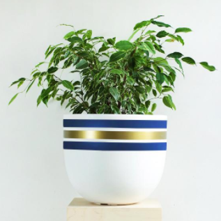 Stripe Tease Pot - HartCo. Home & Body