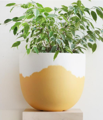 Sorbet Pot - HartCo. Home & Body