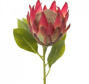 Protea King Pink - HartCo. Home & Body