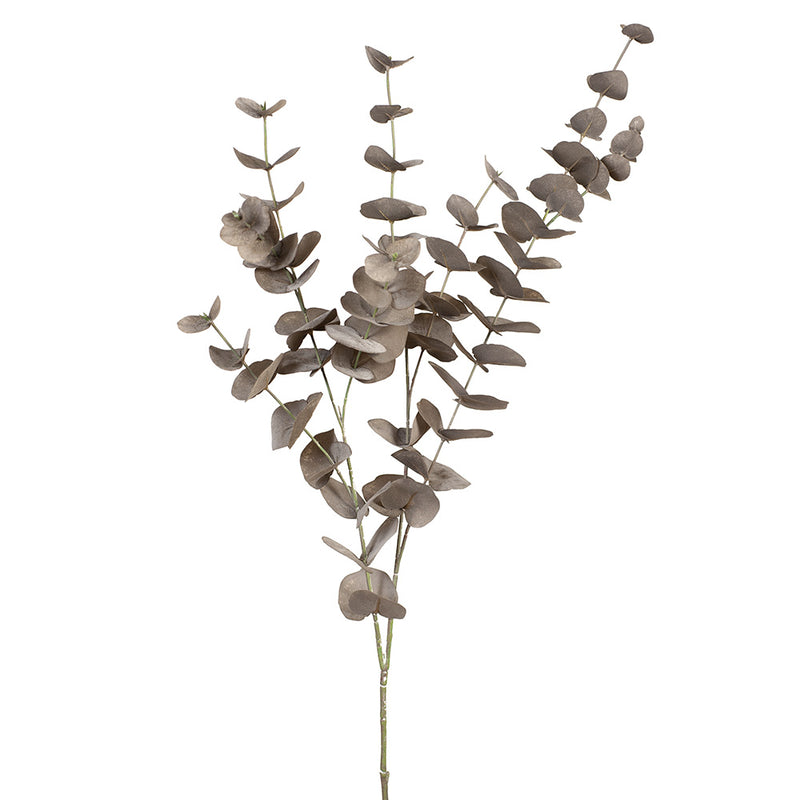 Eucalyptus Silver Dollar Bush - Coffee 101cml