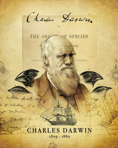 | Darwin's Discovery Archival Print