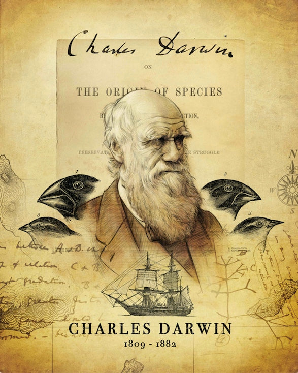 Darwin's Discovery Archival Print
