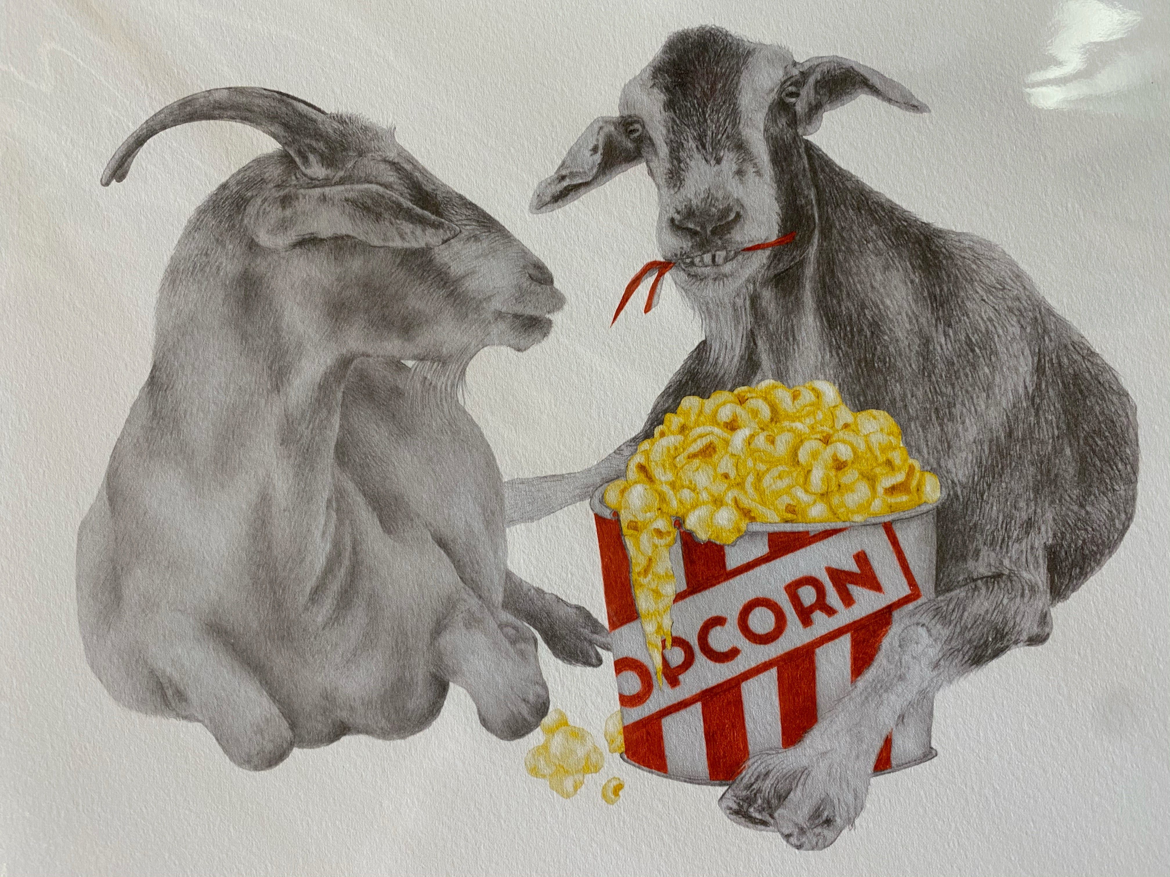 Goats eating popcorn print by Central and Gus