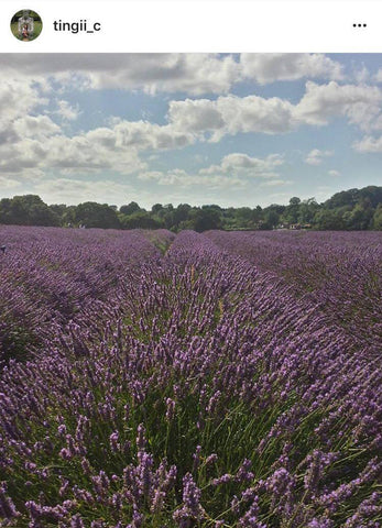 mayfield lavender field london photography locoation
