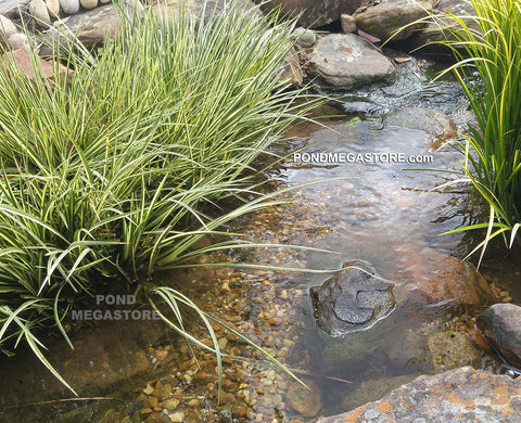 Shelf Plants, Bog Plants, Shallow water aquatic plants
