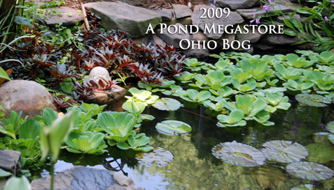 Emergent Pond Plants