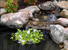 Nycon Floating Plant/Koi fish Barrier<br> (3 Sizes to choose from) <br> Protect floating plants from koi<br> *Ships after March 10th 2021