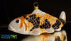 Koi Fish Ornament (Taisho Sanke) Orange, Black and White)