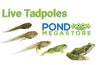 Live Frog Tadpoles for sale <br> Tadpoles are for Ponds - not tanks<br> Available Spring 2021