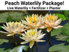 Peach Waterlily Kit  <br>  Pre-Potted, Pre-Grown <br> Plants Available Spring 2021
