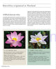 Thai Nationality Waterlily in Pang U Bon <br> by Primlarp Wasuwat & Komgrit Chukiatman <br> Hardcover