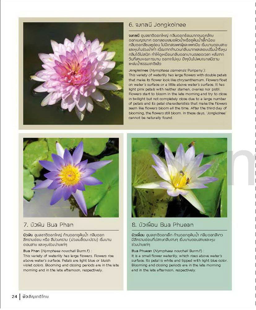 Buy water lilies water garden plants for the average buy water lilies water garden plants for the average pondmegastore waterlilies pond plants lotus izmirmasajfo