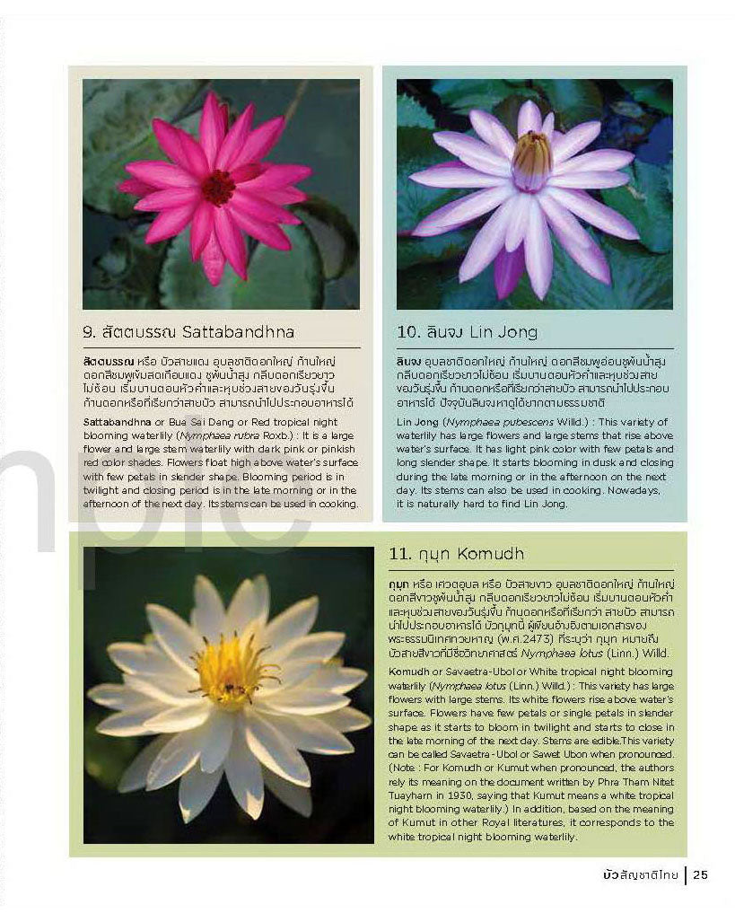 Buy Water Lilies Water Garden Plants For The Average