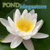 Marlaicea Albida Water Lily <br> Medium Hardy Water Lily  <br>Top 20 Bloomer!