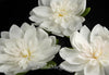 Artificial White Imitation 7 Inch  Waterlily