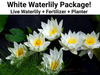 White Waterlily Starter Kit  <br>  Pre-Potted, Pre-Grown  <br>  Ships Spring 2021