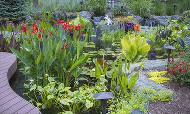 How to Plant 'Pond Plants'