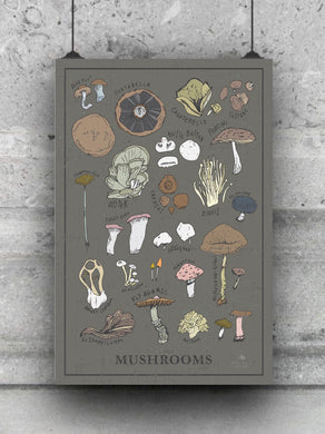 Illustrated Mushrooms print