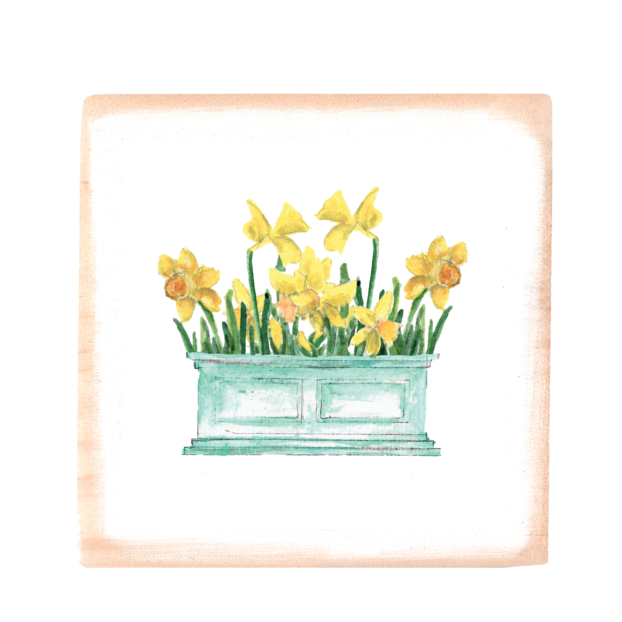 daffodils in flower box