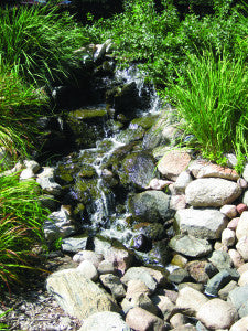 Algae Management for Koi Ponds and Water Gardens
