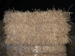 Barley Straw, Bulk Bale (makes about 5 bags)