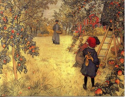 Boxed Note Cards, Carl Larsson Apple harvest