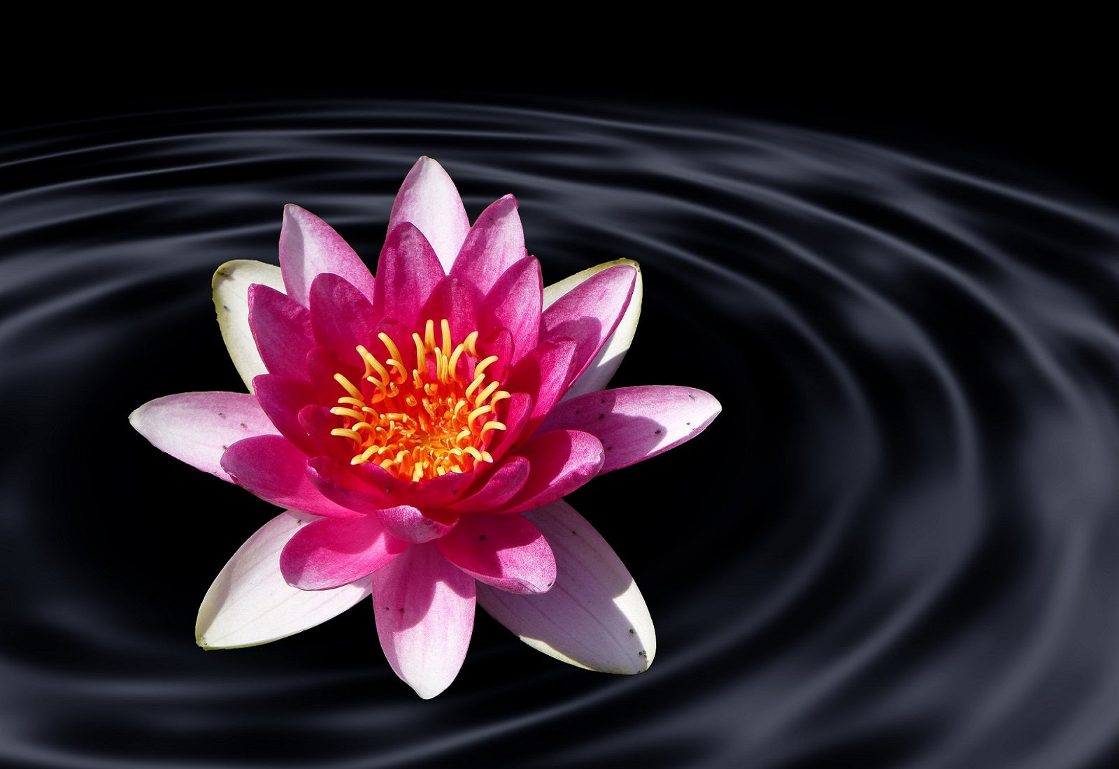 Lotus Flower Meaning Yoga Spirituality Symbolism Stephanie Rose